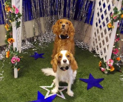 Doggy Prom at Best Friends Pet Care in Disney World